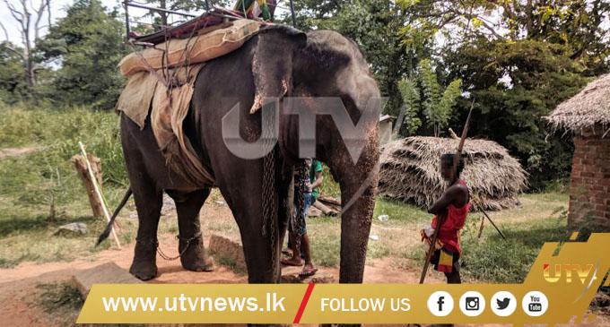 International animal rights group urges tourists to boycott events, rides in Sri Lanka using elephants [VIDEO]