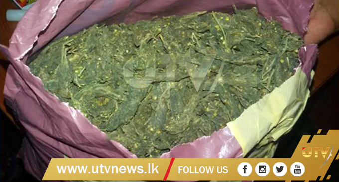 Three suspects arrested with Kerala cannabis in Jaffna